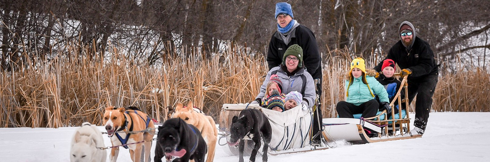 Dog sledding in Thief River Falls